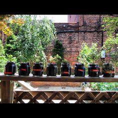 Summer herbs.