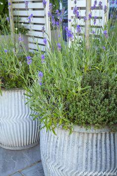 Fulham | Slim & Subtle Garden Design London Small Space Gardening, Garden Spaces, Small Gardens, Outdoor Gardens, Garden Design London, Modern Garden Design, Patio Design, Greek Garden, Greek Decor