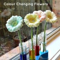 Colour Changing Flowers Experiment