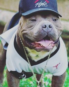 #fashion #love #puppy #photo #passion #follow #selfie #dog #dogsofinstagram #Vittorio #americanbully_ by americanbully_