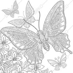 Butterfly And Flowers Coloring Page Adult By ColoringPageExpress