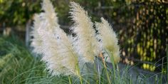 Dandelion, Nature, Flowers, Plants, Gardening, Indoor, Decor, Interior, Naturaleza