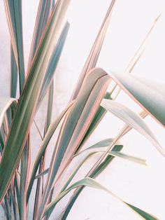 New Flowers Photography Wallpaper Inspiration Colour Ideas Planet Decor, Plant Aesthetic, Aesthetic Art, Amazing Greens, Plants Are Friends, Belle Photo, Indoor Plants, Color Inspiration, Motivation Inspiration