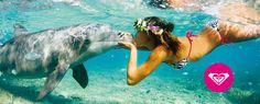 Roxy-dolphin kisses