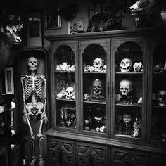 Immagine di skull, black and white, and bones
