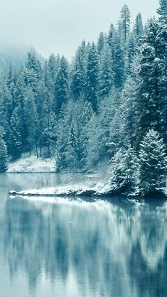 Pine Forest Lake Snow #iPhone #5s #wallpaper