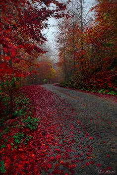~~LÂ'L | blazing red autumn road landscape, Bolu, Turkey | by Zeki Seferoglu~~