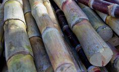 Empresa cearense utiliza cana de açúcar na reciclagem e produz papelão. O produto final é mais resistente que o comum.