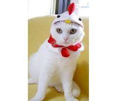 Resultado de imagem para gatinhos fantasiados