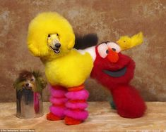 A dog dressed as characters such as Big Bird and Elmo from Sesame Street at a creative grooming competition in Pasadena, California