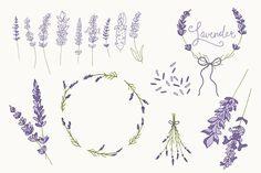 Lavender Clip Art & Vectors by The Pen & Brush on @creativemarket
