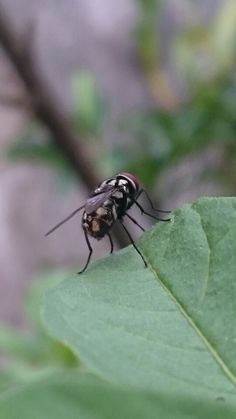 @OnTheWay #InsectsHer #FLY #FlorDeMato