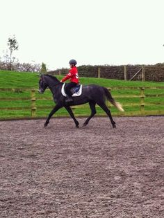 Champs palace and dylan first ride at home
