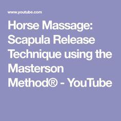 Horse Scapula Anatomy  Horses    Scapula Anatomy And