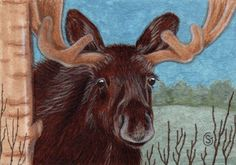 Moose Bull Watercolor Original ACEO ART Mixed Media Woods Forest by Sherry Goeben  #Realism