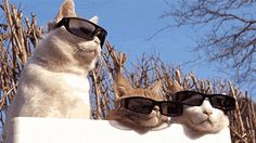 LOL, I love this! Reservoir Cats