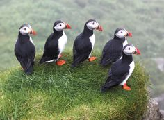 Visit Mykines in the Faroe Islands, every summer hundreds of thousands of puffins flock to this island every year. Beautiful Birds, Animals Beautiful, Animals And Pets, Cute Animals, Puffins Bird, Tier Fotos, Sea Birds, Wild Birds, Faroe Islands