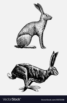 Rabbit or hare sitting and running hand drawn, engraved wild animals in vintage or retro style, zoology set european Rabbit Drawing, Rabbit Art, Jack Rabbit, Hare Illustration, Illustrations, Running Art, Rabbit Tattoos, Scratchboard, Bunny Art