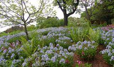 Cómo mantener alejados a los insectos del jardín - http://www.jardineriaon.com/como-mantener-alejados-a-los-insectos-del-jardin.html #plantas