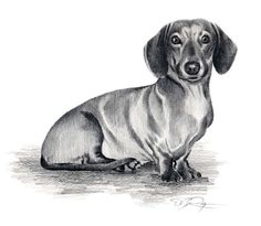DACHSHUND Dog Art Print Signed by Artist DJ Rogers by k9artgallery, $12.50