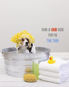Need some #dog-bathing tips? Here are 5 great tips to help give you and your furry friend a positive bathing experience...