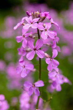 Dainty Little Pink Flowers