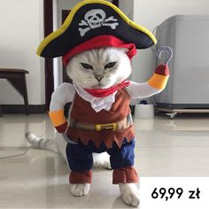 Us 386 36 Off Pet Clothes Pet Dog Halloween Pirate Cool Cute Dog Pet Cosplay Costume Clothing Vest Pets Acessorios In Dog Coats Amp Jackets Costume Halloween, Cute Costumes, Halloween Clothes, Chien Halloween, Dog Halloween, Costume Chien, Pirate Cat, Gatos Cat, Funny Cat Compilation