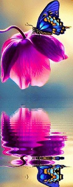 Blue+Butterfly+on+a+Pink+Flower.jpg (240×610)