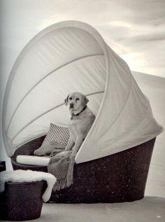 Chessie loves Dedon Outdoor Furniture!   #jeffreyalanmarks #JAM #homedecor