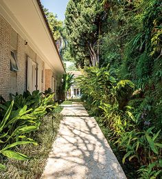 A porta de entrada desta casa é acessada pelo corredor lateral cheio de espécies tropicais. Os paisagistas Caterina Poli e Sérgio Menon criaram um caminho que foge do óbvio. A questão da sombra norteou a escolha de espécies, como filodendros
