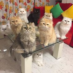 My kind of squad 😎🐱 #squad #squadgoals ______________________________________________ #catsofinstagram #catstagram #weeklyfluff #9gag #fluffypack #catsofworld #cats_of_instagram  #crazycatlady #neko #kitty #gato #kucing #instacat #instapet #instagood #instamood #instadaily #meowbox