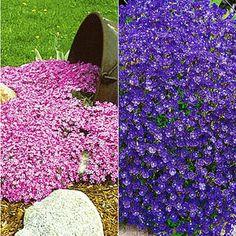 Rosen Beet, Recherche Google, Stepping Stones, Lily Pulitzer, Purple, Outdoor Decor, Plants, Gardening, Home Decor