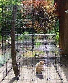 Build A Do-It-Yourself Outdoor Cat Enclosure Or Run out of black wire storage shelfs.