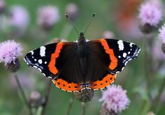 Butterfly On Flower, Closer To Nature, Picture Video, Bugs, Butterflies, Wallpaper, Animals, Papillons, Animales