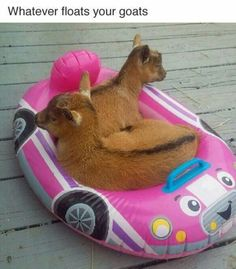 What ever floats your goats.