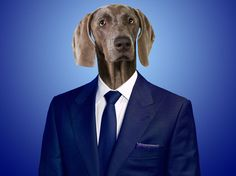 June 24th is Take Your Dog To Work Day