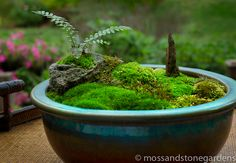 tabletop moss garden - must make one of these.