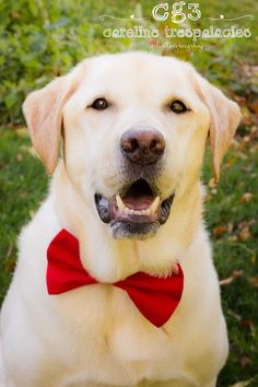 Doggie Bowtie  Handmade Dog Collar Accessories  by TwoLCreations, $15.00