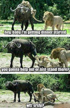 LOL pictures funny of the hour PM, Tuesday May 2015 PDT) – 20 pics Funny As Hell, Funny Cute, The Funny, Hilarious, Funny Stuff, Funny Animal Pictures, Best Funny Pictures, Funny Animals, Jokes