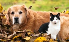 Watch out for these common pet poisons come Fall.