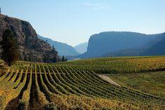 Blue Mountain Vineyards, Okanagan Falls, BC thanks Jeff, great shot