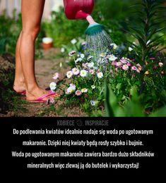 Do podlewania kwiatów idealnie nadaje się woda po ugotowanym makaronie. Dzięki niej kwiaty będą rosły szybko i bujnie. Woda po ...