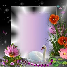 Enhance your photos with Kimi templates. Beautiful Nature Pictures, Beautiful Nature Wallpaper, Foto Frame, Dove Pictures, Creative Flower Arrangements, Photo Frame Design, Family Photo Frames, Picture Frame Decor, Framed Wallpaper