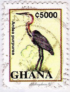 Ghana.  ARDEA PURPUREA.  Scott 1840 A319, Issued 1995 June 19, Litho., Perf. 14 1/2 x 13 3/4, 5000. /ldb.