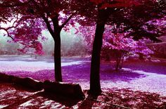 infrared picture free, 2400x1581 (1104 kB)