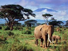 elephant and mountain