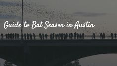 Guide to Bat Season in Austin, which runs from March through November every year.