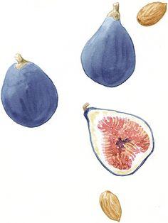 figs300.jpg (525×700)