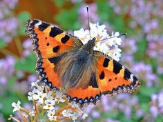 Free Jigsaw Puzzles Online - BUTTERFLY  #JigsawPuzzles #JigsawPuzzle #Puzzle