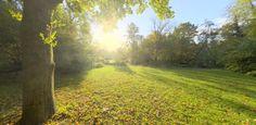 Free HDRI: Sunny Vondelpark